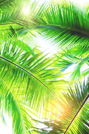 Green palm trees at sunny day on white background.