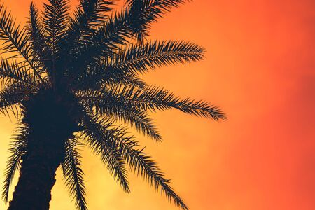 Golden tropical sunset with dark silhouette of coconut palm tree. Trendy vintage toned summer travel background with copy space. Retro style creative design concept. Open composition.