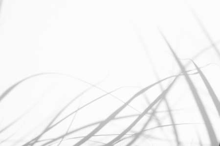 Overlay effect for photo. Blurred gray shadows of delicate grass on a white wall. Abstract neutral nature concept background. Space for text. Shadow for natural light effects. Banque d'images