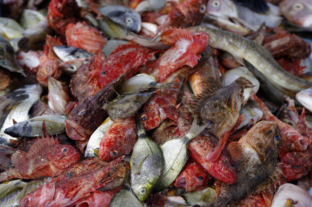 fish store: Escritorio con pescado y marisco de la tienda de peces Foto de archivo