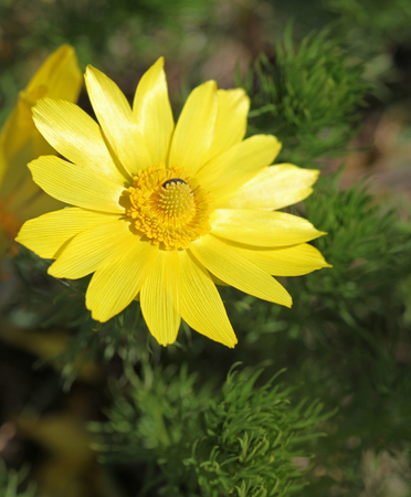 trembling: Yellow flowers are trembling in the wind