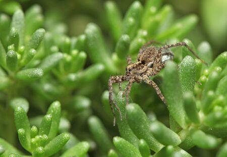 Grey spider sitting on green plant Zdjęcie Seryjne