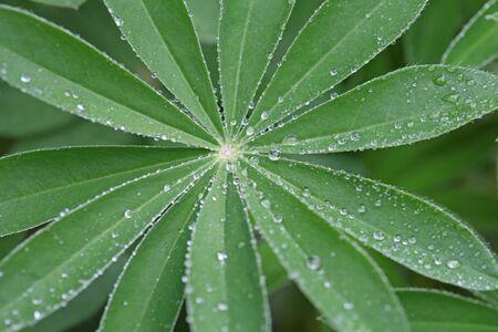 Green leaf with drops of water Zdjęcie Seryjne