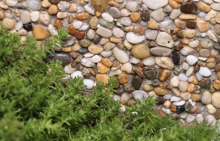 Fresh green plant on stone background