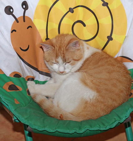 Sleeping orange cat in a basket