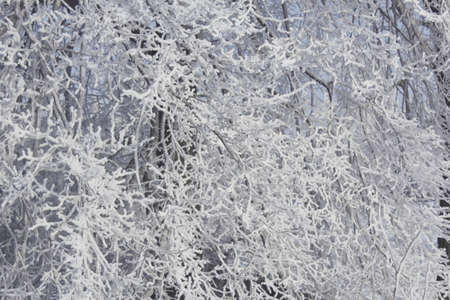 Cold winter weather in the photo nature a lot of snow, everything is frozen branch close-up
