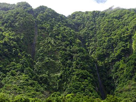 Waterfalls among rainy forest, Madeira photo