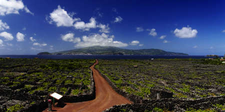 agriculture azores: Red trail among Vineyard, Pico island, Azores, Portugal Stock Photo