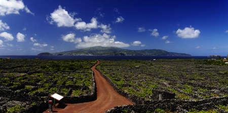 Red trail among Vineyard, Pico island, Azores, Portugal Standard-Bild