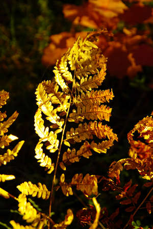 Autumnal leaves photo