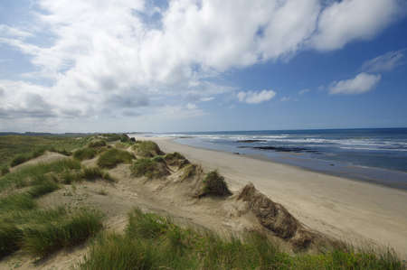 vicinity: Dune and beach on the north of Portugal in the vicinity of the Esposende town.