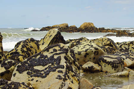 vicinity: The mussels colony in Parque Natural do Litoral on the north of Portugal in the vicinity of the Esposende town. Stock Photo