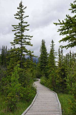 canmore: Trail in park in Canmore, Alberta, Canada
