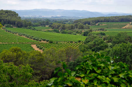 Landscape of vineyards in the Penedes vine zone, Catalonia, Spain. Stock Photo