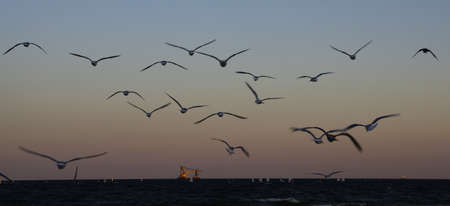The key seagulls departing late September afternoon towards the Baltic sea, Gdynia, Poland