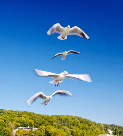 The seagulls fly over pier in Gdynia Orlowo