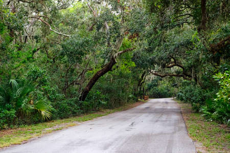Road among Spanish moss hangs in shadows of wide branches of oak trees. Amelia island, Florida, USA