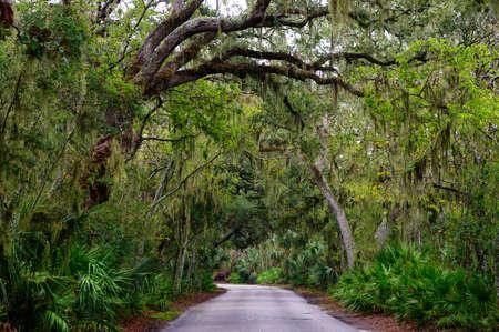 Road among Spanish moss hangs in shadows of wide trees. Amelia island, Florida, USA Stock Photo