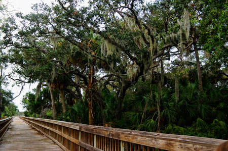 A boardwalk across marshy ground and lush tropical woods with abundant Spanish moss draping branches of live oak trees at Big Talbot Island State Park, Florida, USA Stock Photo