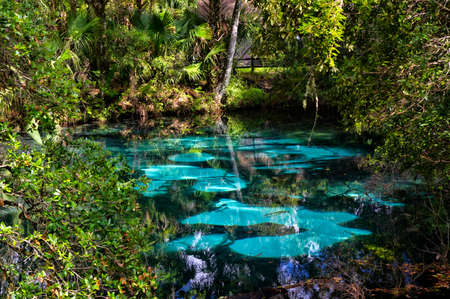 The hot blue and emerald geothermal pools set among quiet and lush tropical vegetation. Juniper Springs Florida. Editorial