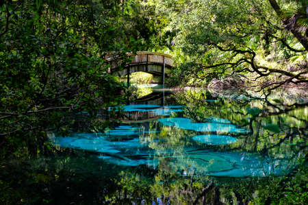 An arched wooden footbridge over the blue and emerald pools set amidst quiet and serene rich and lush tropical vegetation. Juniper Springs Florida.