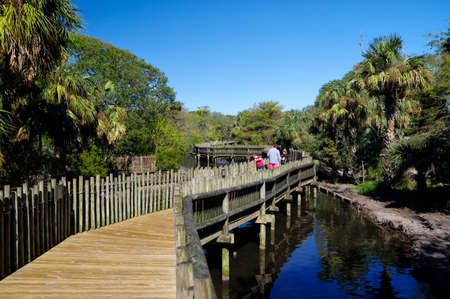ST AUGUSTINE, FLORIDA, US - OCTOBER 25, 2017 - People walking on the wooden boardwalk in the Alligators farm in St. Augustine on October 25, FL, USA Editorial