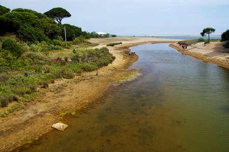Die sandige Landschaft des Nationalparks Marismas del Odiel in Andalusien, Spanien