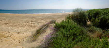 The sandy landscape of Marismas del Odiel National Park in Andalusia, Spain
