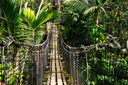 BASSE-TERRE/GUADELOUPE - JANUARY 07, 2019: Suspended bridges at top of the trees in Parc Des Mamelles, Guadeloupe Zoo in the middle of the rainforest on Chemin de la Retraite, Bouillante. French Caribbean. Standard-Bild - 132887070