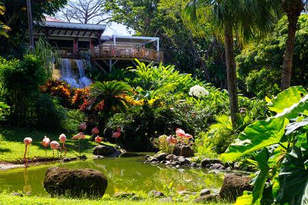 Beautiful flamingos in Botanical Garden in Deshaies, north west of Basse-Terre, Guadeloupe Standard-Bild - 132887083