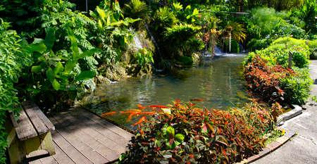 BASSE-TERRE/GUADELOUPE - JANUARY 07, 2019: Beautiful botanical garden - Jardin de Deshaies, north west of Basse-Terre, Guadeloupe, Caribbean Standard-Bild - 132887084