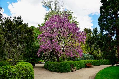 The Royal Botanical Gardens in Madrid, Spain, Europe Standard-Bild - 136032232
