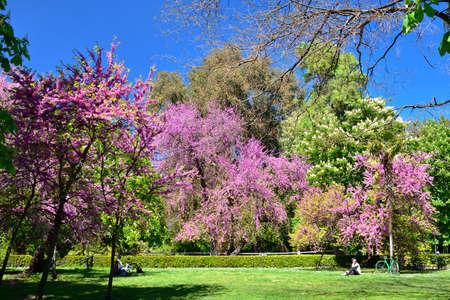 MADRID / SPAIN - APRIL 12, 2019 - Young people reading books under beautiful blooming tree in the public Gardens of the Good Retreat (Jardines del Buen Retiro). Standard-Bild - 137014193