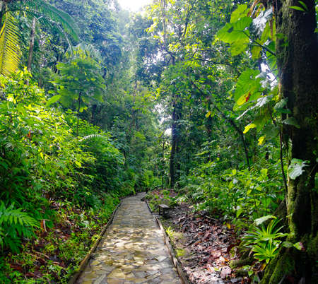 A stone trail leading to Chute du Carbet waterfalls group inside a tropical forest located in Basse-Terre, Guadeloupe. Stock Photo