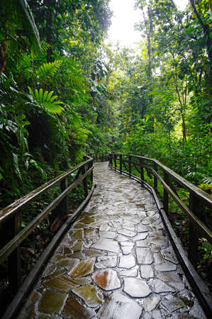A stone trail leading to Chute du Carbet waterfalls group inside a tropical forest located in Basse-Terre, Guadeloupe. Stock Photo - 143458683
