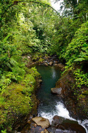 Mountain stream inside a tropical forest located in the National Guadeloupe park, Basse-Terre, Guadeloupe
