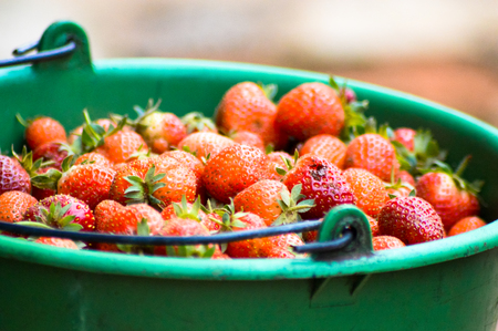 strawberry in a bucket