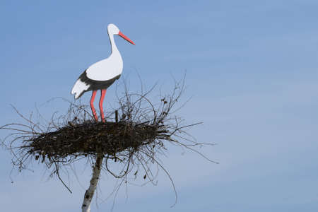 black stork: White stork is on the nest Stock Photo