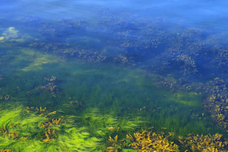 blue green algae stock photos royalty free business images