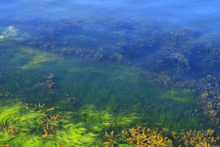 Green and yellow algae in the ocean floor