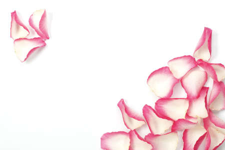 Pink rose petals are other sides of the corners like a decoration of card.