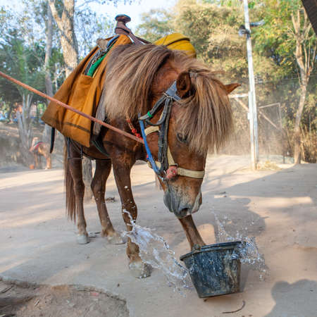 Buddhist horse overturn bucket of water. Stock Photo