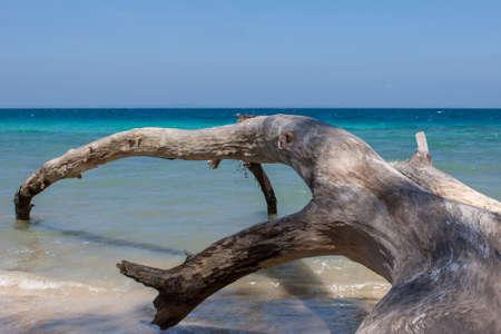 헤벌 록 섬 해변, 안다만스, 인도에 타락한 나무. 물 속에서 큰 오래 된 타락한 나무와 경치. 열 대 타락 한 나무 줄기 바다에서 분기합니다. 스톡 콘텐츠