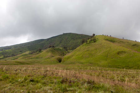 Savanna and green hill of mt. Kursi in Bromo Tengger national park. Stock Photo