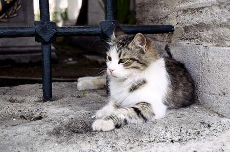 Closeup of elegant persian cat on wall photo