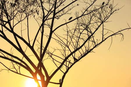 arbre mort: Oiseaux sur l'arbre mort