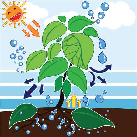 La fotosíntesis es un proceso utilizado por plantas y otros organismos