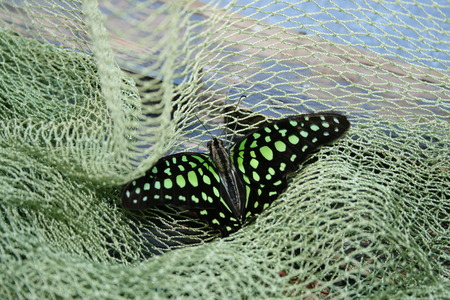 Large in the frame color butterfly in the green grid photo