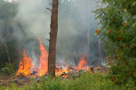 Large flames in the mixed forest in the European part of Russia photo