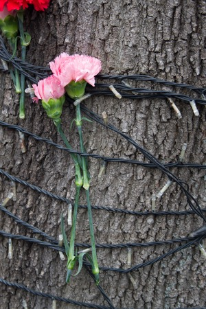 boris: Moscow, Russia - March 3, 2015. tree with flowers near the venue of the funeral of Boris Nemtsov. Farewell to the oppositionist Boris Nemtsov, who was killed near the Kremlin